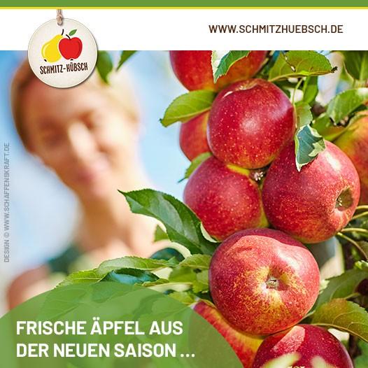 Frische Äpfel aus der neuen Saison …