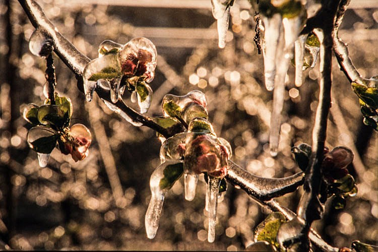 Das Obstbaumuseum